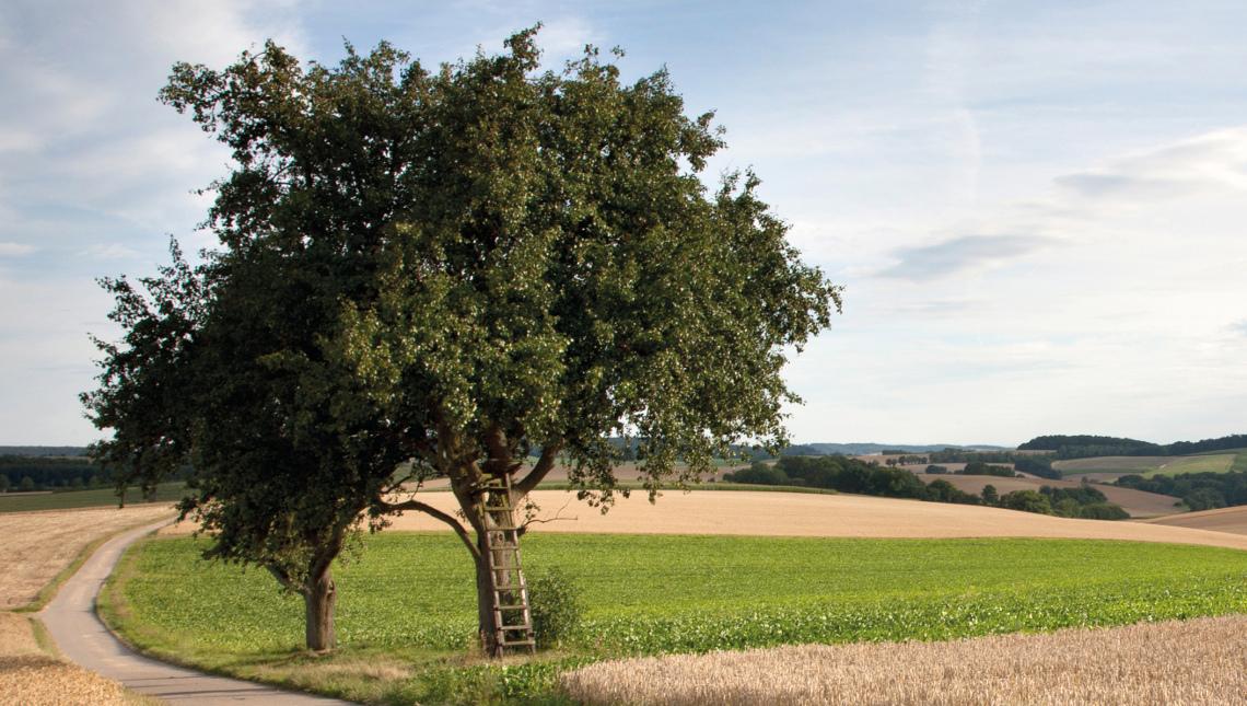 Landschaft Kraichgau, Bild: D. Burkhardt / Rhein-Neckar-Kreis